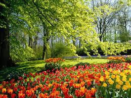 arbori-si-flori