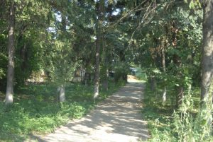 ocolul silvic costesti foto 1